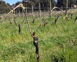 Moondarra Vineyard