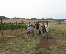 Visiting the vineyard